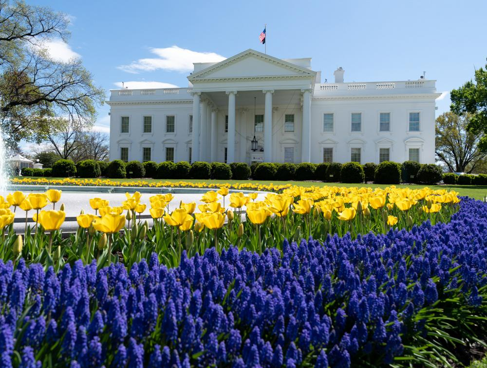 White House with yellow and purple flowers in the immediate foreground